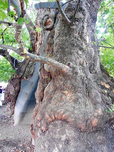 按图片以查看大图名称: 九百年老树ohrid macedonia 824 2012 (49).JPG查看次数: 3文件大小: 3.59 MBID: 830103